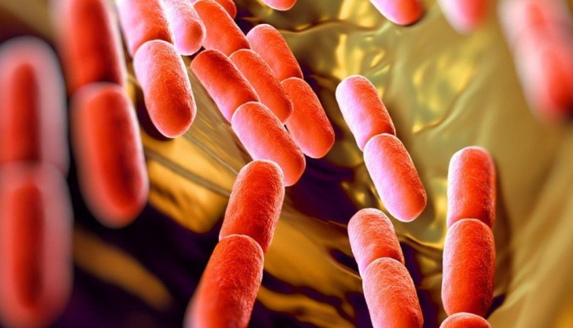 vTest na bakterie